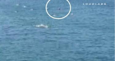 Επίθεση λευκού καρχαρία σε κολυμβητή (βίντεο)