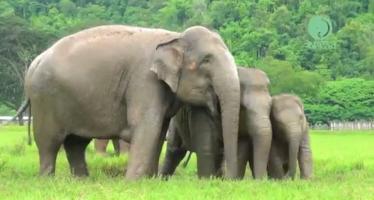 Ελέφαντες παίζουν στη βροχή σαν μικρά παιδιά (βίντεο)
