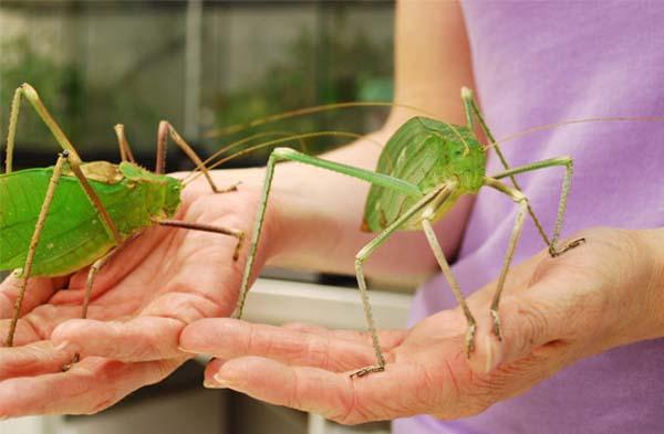 ανατριχιαστικά έντομα