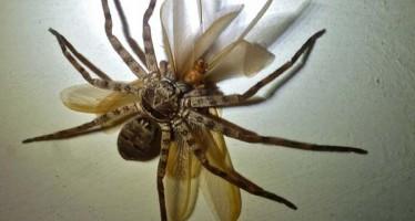 Τα 8 πιο ανατριχιαστικά έντομα που έχω δει!