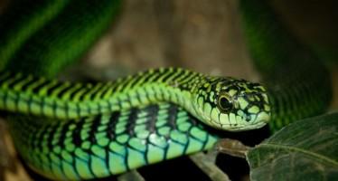 Τα 17 πιο επικίνδυνα φίδια στον κόσμο!