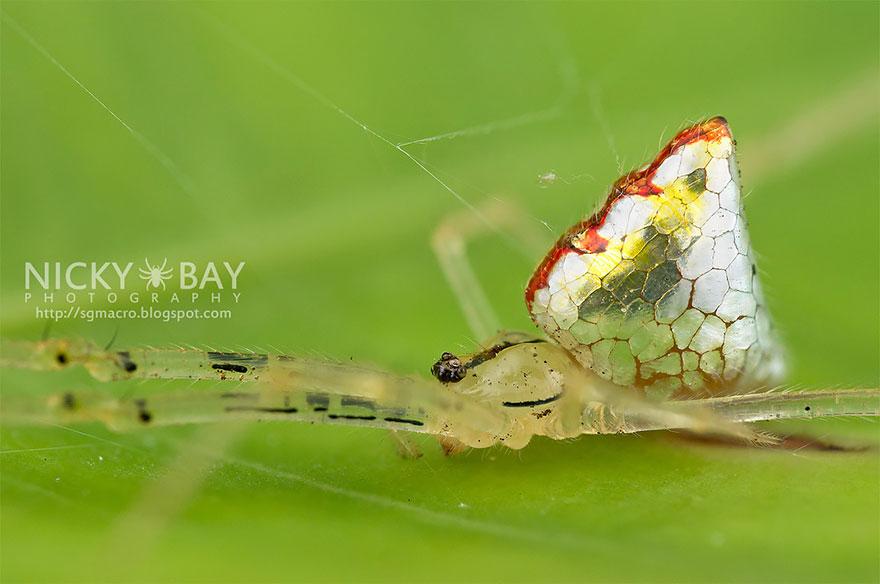 entyposiaki arachni aggouria.net