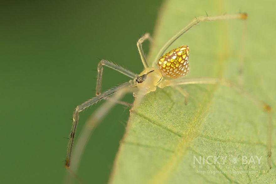 entyposiaki arachni εντυπωσιακή αράχνη aggouria.net