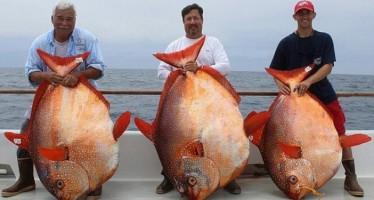 Δες τι έπιασαν ψαράδες στην νότια Καλιφόρνια!