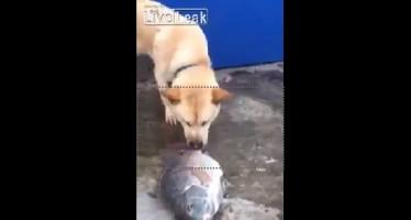 Απίστευτο βίντεο: Σκύλος με χρυσή καρδιά!