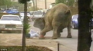 tyke elefantas hawaii