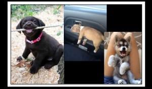 10 Ράτσες σκύλων που δεν θα σε υπακούσουν εύκολα!