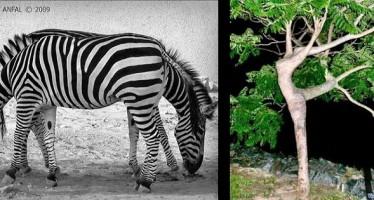 12 Περίεργες φωτογραφίες που προκαλούν ψευδαισθήσεις!