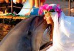 pantremenh-me-delfini
