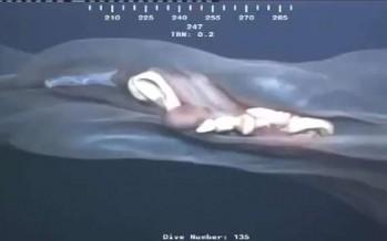 Περίεργο πλάσμα «πιάστηκε» στα βάθη του ωκεανού!
