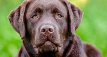 Οι 5 καλύτερες ράτσες σκύλων για την οικογένεια!