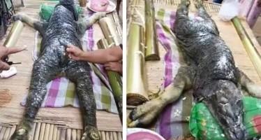 Βρέθηκε βούβαλος με μορφή κροκόδειλου στην Ταϊλάνδη!