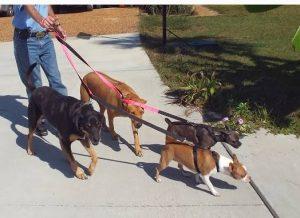 λουριά-καραμπίνερ-σκυλιά