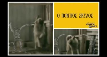 Ο πόντιος σκύλος που κάνει θραύση στο Ίντερνετ!