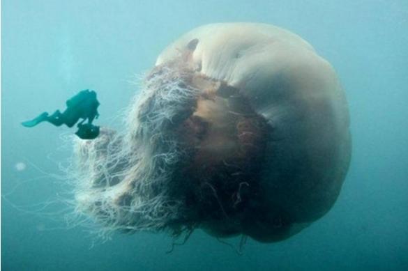 eikones gigantia medousa