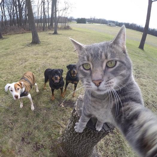 gata selfie