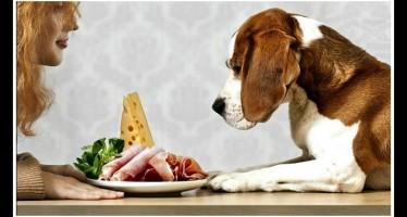 7 Τροφές που μπορούν να σκοτώσουν το σκύλο σου!