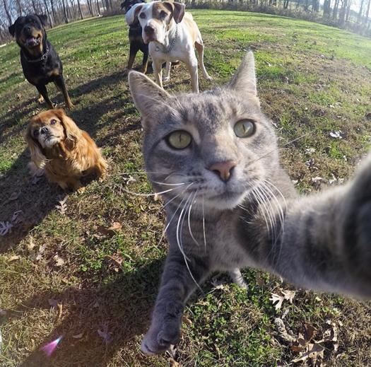 selfie gata skuloi