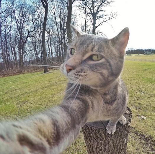 selfies fotografies zoa