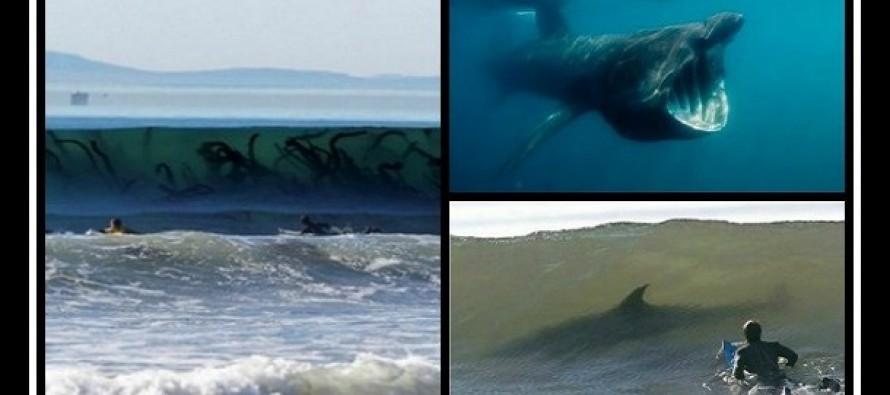 14 Εικόνες που σε κάνουν να μη θες να μπεις στη θάλασσα!