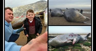 Βρέθηκαν νεκρές 3 φάλαινες φυσητήρας στο Ηνωμένο Βασίλειο!