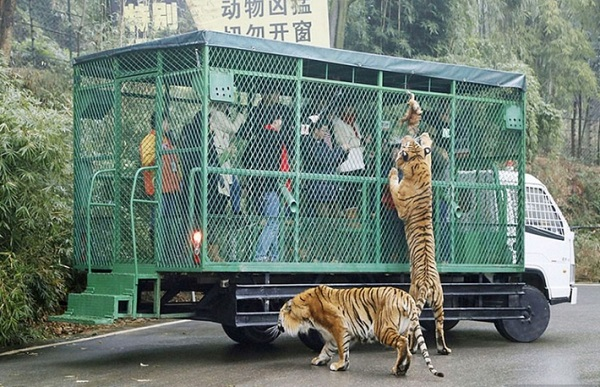 zoologikos kipos kina eidisi