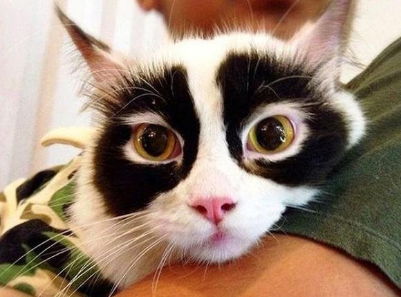 aspromauros gatos