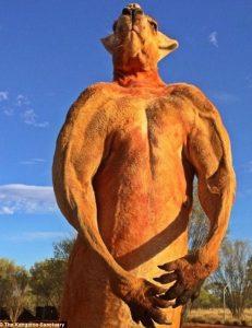 muodes kagkouro australia