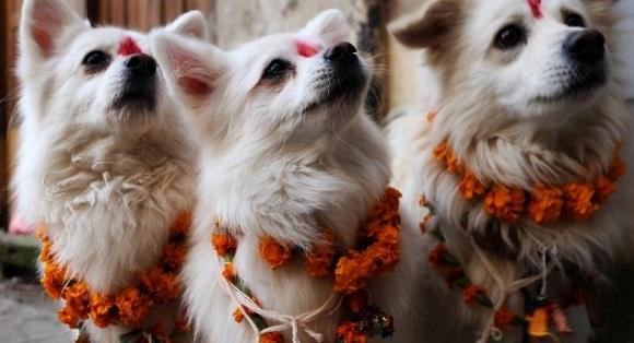 Tihar festival skulon