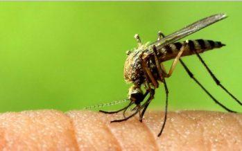 Γιατί τα κουνούπια τσιμπάνε μερικούς ανθρώπους περισσότερο!