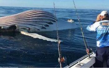 Ψαράς φωτογράφισε περίεργο πλάσμα στις ακτές της Δυτικής Αυστραλίας!