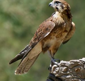 Πόσο μεγάλο είναι το μεγαλύτερο πουλί στον κόσμο