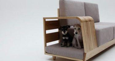 10 Έξυπνες ιδέες από έπιπλα για γάτες και μικρόσωμα σκυλάκια!