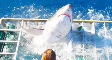 Δύτης παγιδεύτηκε σε κλουβί με μεγάλο λευκό καρχαρία!