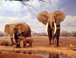 megalytera-zoa-elephantas