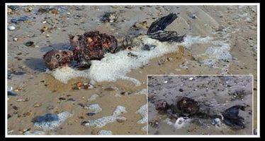 Βρέθηκαν λείψανα γοργόνας σε ερημική παραλία της Αγγλίας!