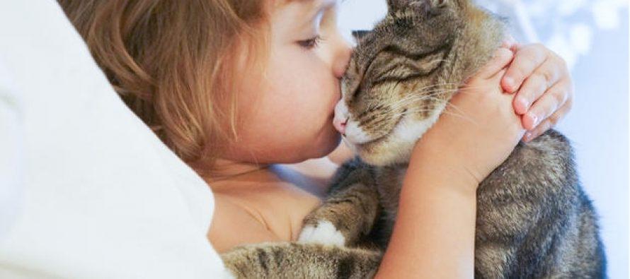 10 Πλεονεκτήματα του να έχεις μια γάτα ως κατοικίδιο!