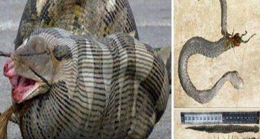 9 Φίδια που σκοτώθηκαν από την ίδια τους την τροφή!