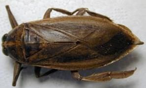 imiptera-to-entomo-tou-filiou aggouria.net