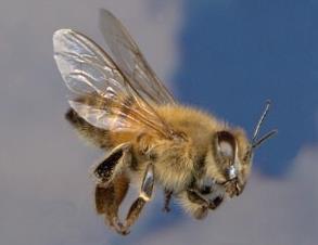 melissa-thanatiforo-entomo