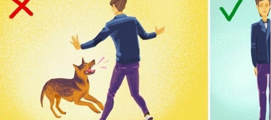 5 Πράγματα που πρέπει να κάνεις αν σου επιτεθεί σκύλος!