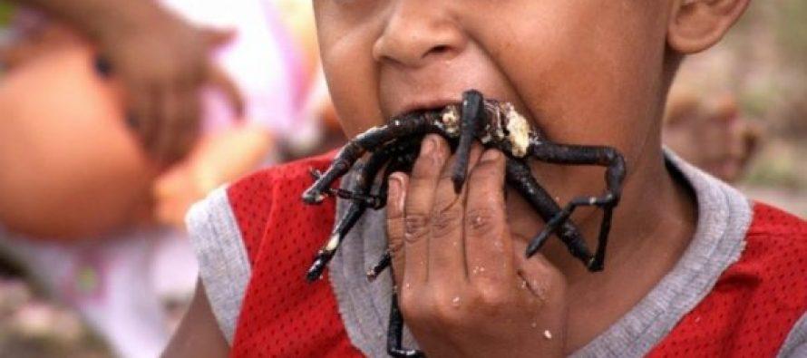 10  Από τα πιο περίεργα ζώα που τρώνε οι άνθρωποι!