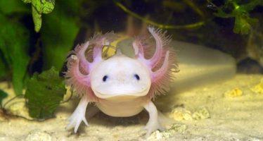 10 Ζώα με υπερδυνάμεις που δεν φαντάζεσαι!