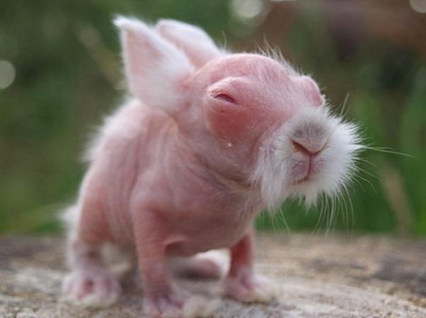 kouneli albino