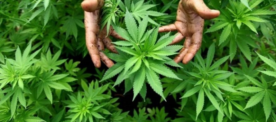 10 Πράγματα που δεν γνώριζες σχετικά με την μαριχουάνα!