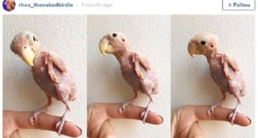 14 Εικόνες με άτριχα ζώα που θα σε κάνουν να ανατριχιάσεις!