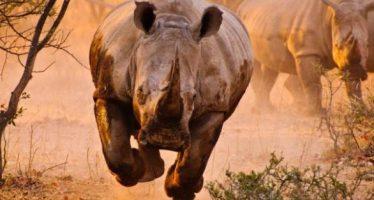 Τα 18 πιο επικίνδυνα ζώα του πλανήτη!
