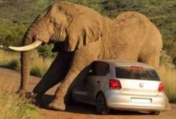 safari tromaktikes eikones