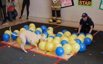 Σκύλος έσπασε 100 μπαλόνια σε 36,53″ και μπήκε στο Βιβλίο Γκίνες!