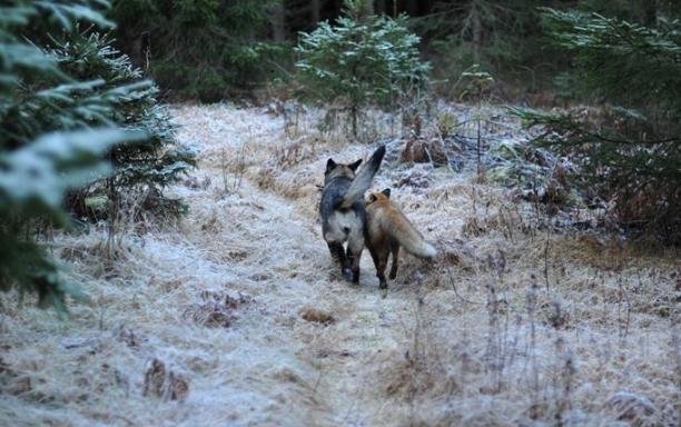 different animals frendship